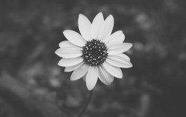 Black And White Flower Plant