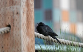 Black Bird Fence