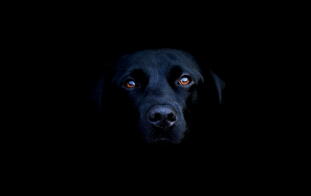 Black Dog in the Dark (click to view)