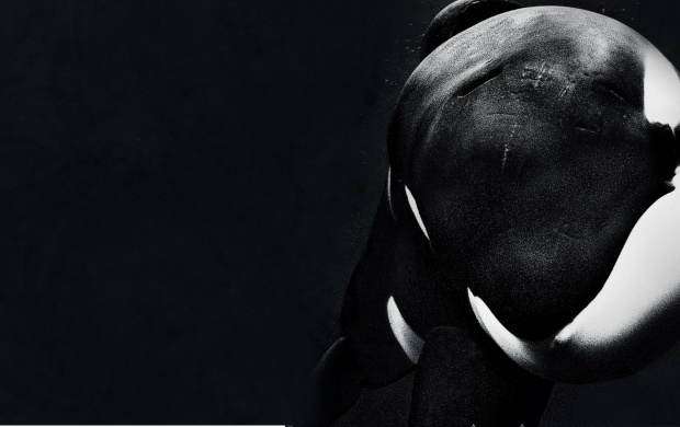 Blackfish 2013 (click to view)