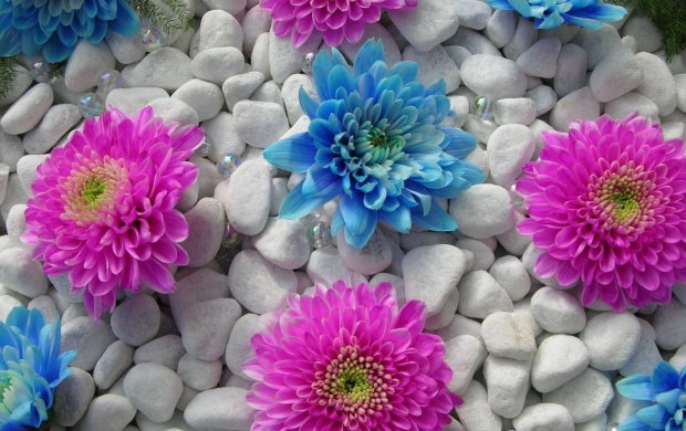 Blue and Pink Flowers (click to view)