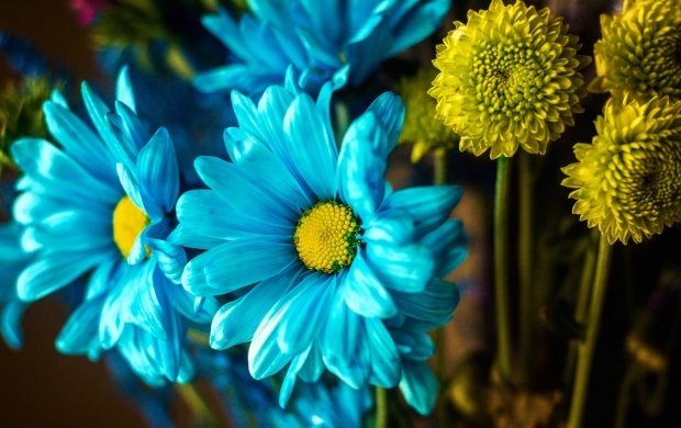 Blue And Yellow Flowers (click to view)