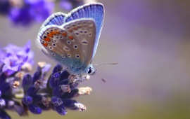 Blue Flower On Butterfly