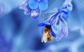 Blue Flowers In Wasps Bee