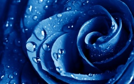 Blue Rose Drops