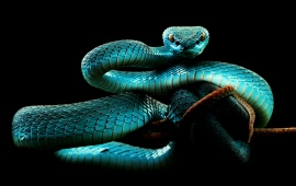 Snake hd wallpapers free wallpaper downloads snake hd desktop 8558 views blue snake voltagebd