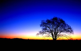 Blue Sunset And Tree