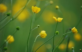 Blur Yellow Flowers Background