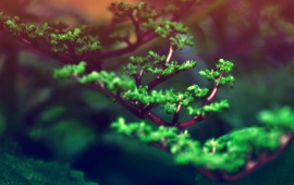 Bonsai Branch Closeup