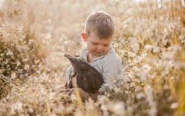 Boy Rabbit Friends Chamomile Meadow
