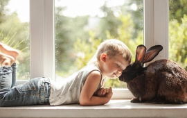 Boy Rabbit Friendship Love