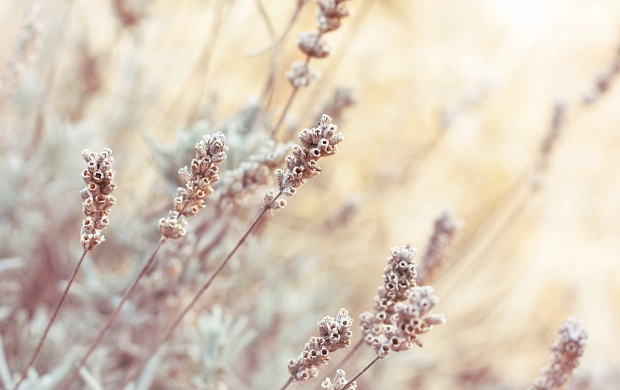 Brown Field Grass (click to view)