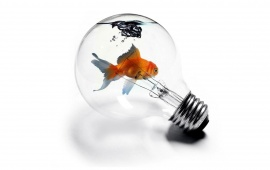 Bulb In Goldfish