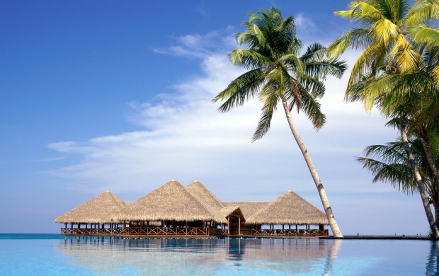 Bungalows and Palms in Maldives (click to view)