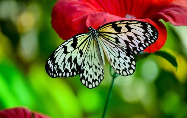 Butterfly 03 (click to view)