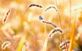 Butterfly Nature Summer Field