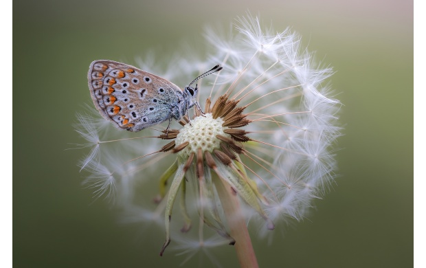 Butterfly On Flower (click to view)