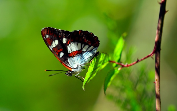 Butterfly On Foliage (click to view)