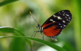 Butterfly Sits On A Leaves