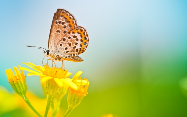 Butterfly Sitting At Yellows Flowers (click to view)