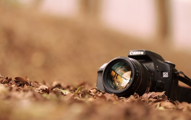 Camera Canon With Leaves (click to view)