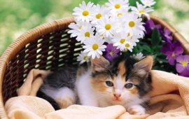Cat And Flower In Basket
