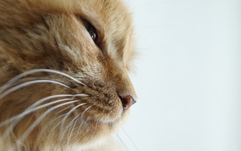 Cat Close Lookup