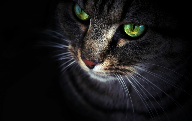 Cat Face Eyes And Black Background (click to view)
