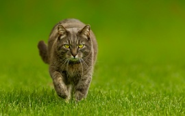Cat Grass And Green Background
