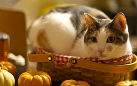 Cat Relax In Basket