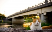 Cat Sitting At Bridge Near