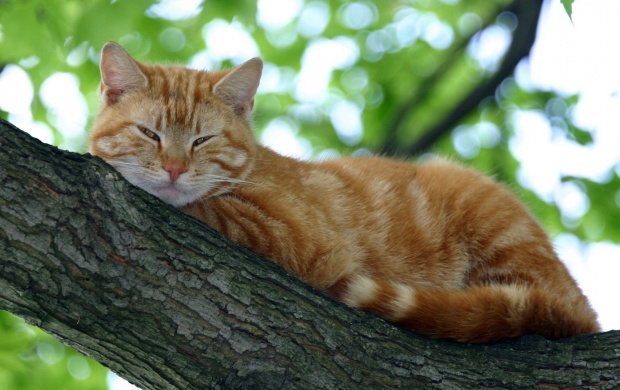 Cat Sleeping on Tree Branch (click to view)