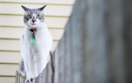 Cat Walk On Fence