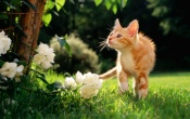 Cat Walking In The Grass