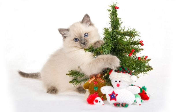 Cat With Christmas Tree (click to view)