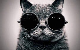 Cat With Cool Sunglasses