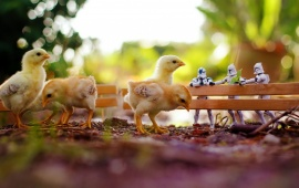 Chickens Star Wars Toys Bokeh