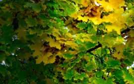 Clean Green Yellow Leaf