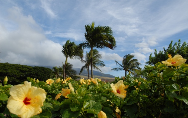 Coconut tree and the flowers (click to view)