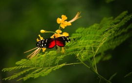 Colorful Butterfly And Flower