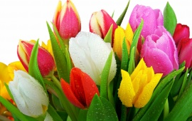 Colorful Fresh Tulips Bouquet