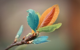 Colorful Leaves On Branch