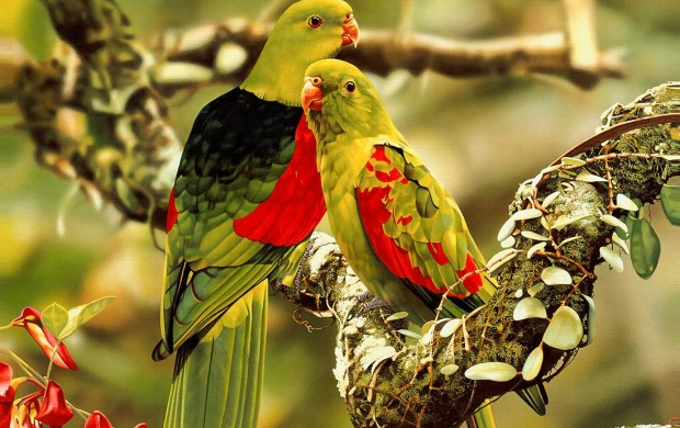Colorful Parrots (click to view)
