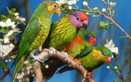 Colorful Parrots Family