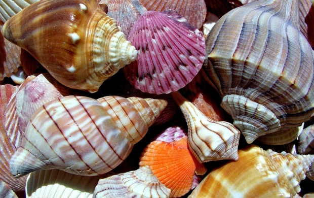 Colorful Shells (click to view)