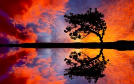 Colorful Sunset Sky And Tree
