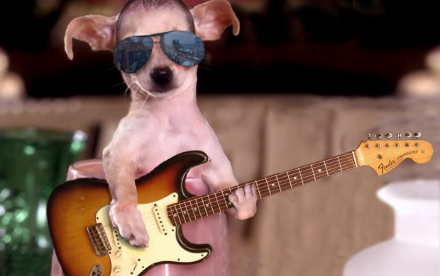 Cool Guitar Star (click to view)