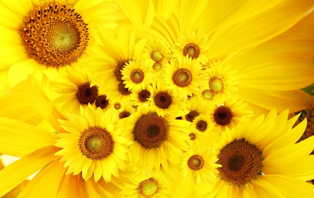 Cool Sunflowers (click to view)