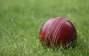 Cricket Ball In The Grass