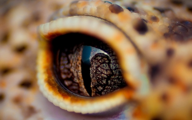 Crocodile Eyes (click to view)